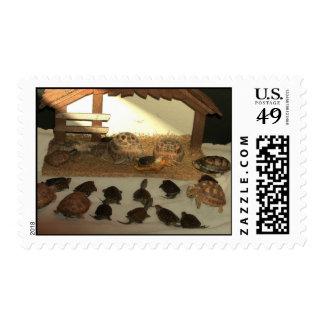 Tortoise Manger postage Stamps