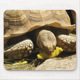 Tortoise Mouse Pad