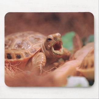 Tortoise Mousepads