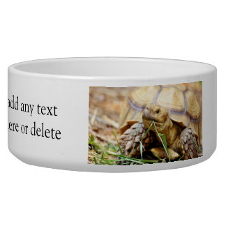 Tortoise Munching Grass Bowl