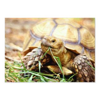 Tortoise Munching Grass Card