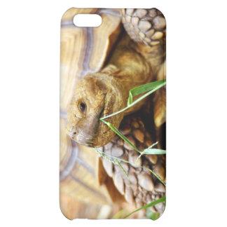 Tortoise Munching Grass iPhone 5C Cover