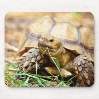 Tortoise Munching Grass Mouse Pad
