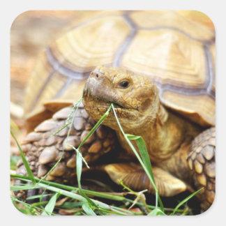 Tortoise Munching Grass Square Sticker