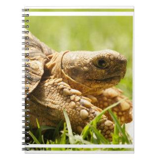 Tortoise Notebook