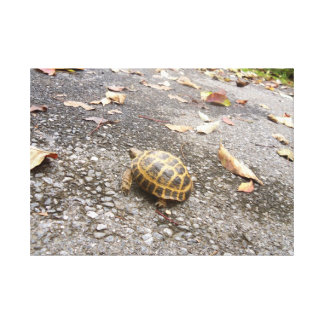 Tortoise on a Mission Natural Photography Canvas Stretched Canvas Print