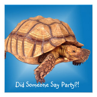 Tortoise on Blue Invitations