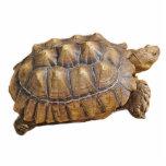 Tortoise - Ornament Photo Sculpture Ornament