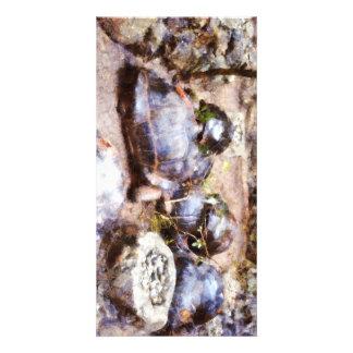 Tortoise path card
