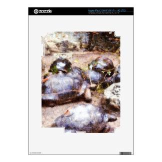 Tortoise path iPad 3 decals