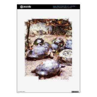 Tortoise path skins for iPad 3