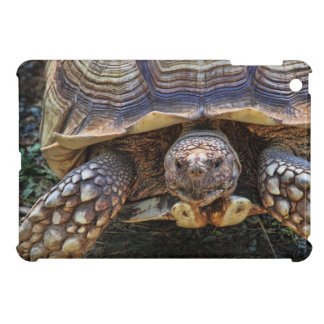 Tortoise Photo Cover For The iPad Mini