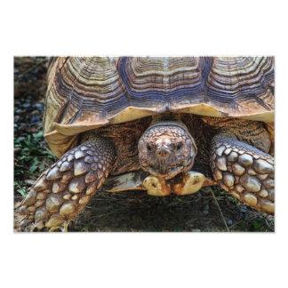 Tortoise Photo