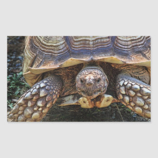 Tortoise Photo Rectangular Sticker