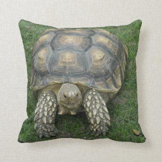 Tortoise Pillow