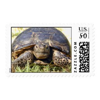 Tortoise Postage Stamp