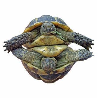 Tortoise Round Keychain Photo Cutouts