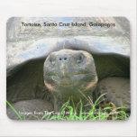 Tortoise, Santa Cruz Island, Galapagos Mouse Pad
