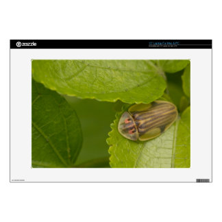 """Tortoise shell beetle, cloud forest, Costa Rica 15"""" Laptop Decal"""