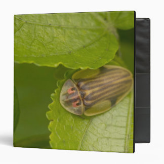 Tortoise shell beetle, cloud forest, Costa Rica 3 Ring Binder