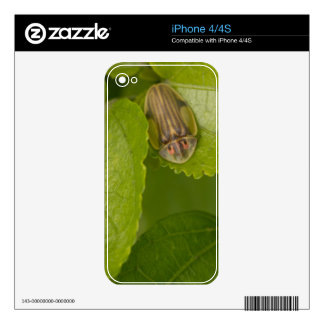 Tortoise shell beetle, cloud forest, Costa Rica iPhone 4 Skin