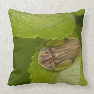 Tortoise shell beetle, cloud forest, Costa Rica Pillows