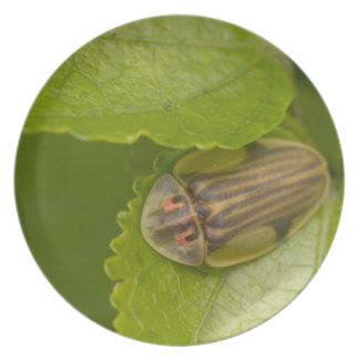 Tortoise shell beetle, cloud forest, Costa Rica Plates