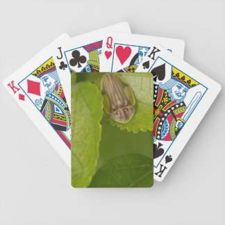 Tortoise shell beetle, cloud forest, Costa Rica Playing Cards