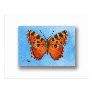 Tortoise Shell Butterfly Postcard