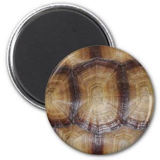 Tortoise Shell Close Up Refrigerator Magnets