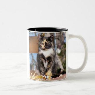Tortoise Shell Kitten 1 Two-Tone Coffee Mug