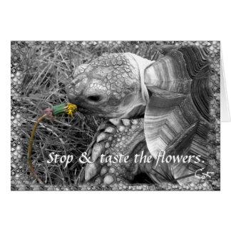 Tortoise - Stop & taste the flowers Card