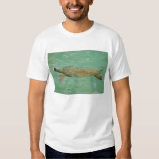 Tortoise swimming and taking a breath t shirts