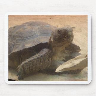 Tortoise Turtle - Staten Island Zoo  CricketDiane Mouse Pad
