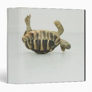 Tortoise upside down, balancing on shell 3 ring binder