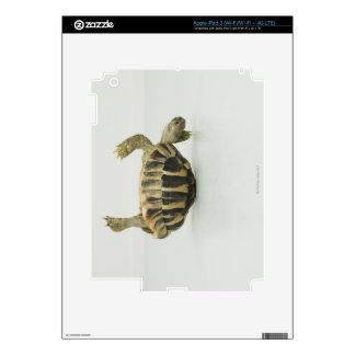 Tortoise upside down, balancing on shell iPad 3 skins