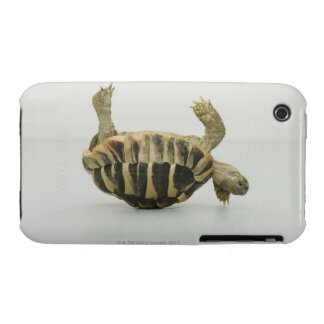 Tortoise upside down, balancing on shell iPhone 3 case