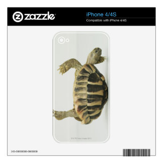 Tortoise upside down, balancing on shell iPhone 4 decal