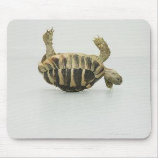 Tortoise upside down, balancing on shell mouse pad