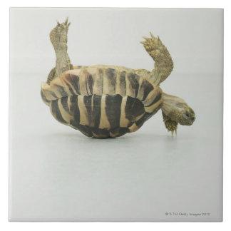 Tortoise upside down, balancing on shell tile