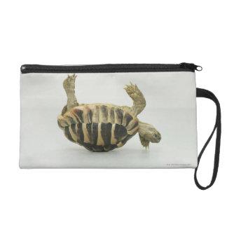 Tortoise upside down, balancing on shell wristlet purse