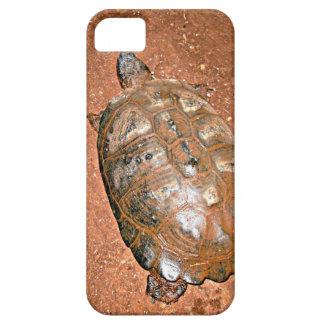 Tortoise walking on brown soil iPhone SE/5/5s case