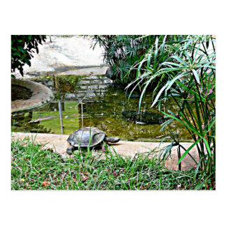Tortoise with pond and bamboo background postcard