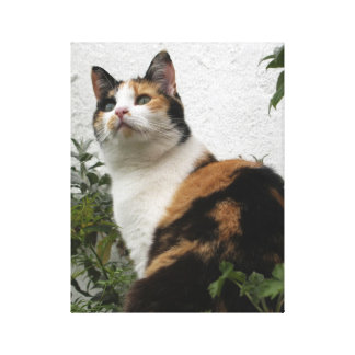 Tortoiseshell and White Cat Canvas Print