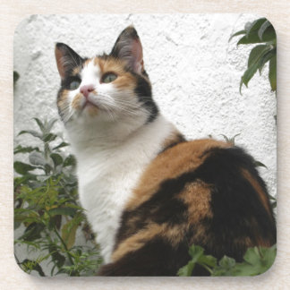 Tortoiseshell and White Cat Coaster