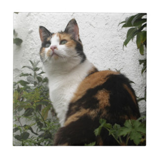 Tortoiseshell and White Cat Small Square Tile