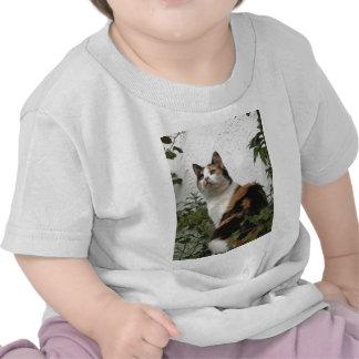 Tortoiseshell and White Cat Tshirt
