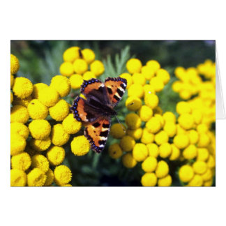 Tortoiseshell butterfly on tansy greeting card
