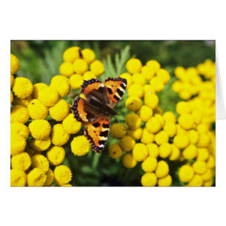 Tortoiseshell butterfly on tansy  flowers greeting card