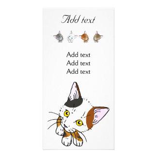 Tortoiseshell cat (三毛猫) picture card